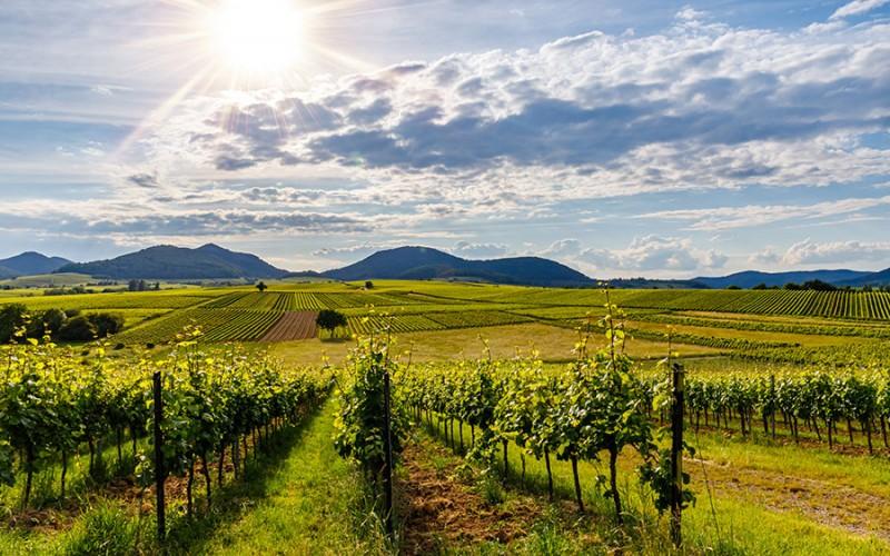 Sonnige Landschaft an der Deutschen Weinstraße - Willkommen in der Ferienregion Pfalz