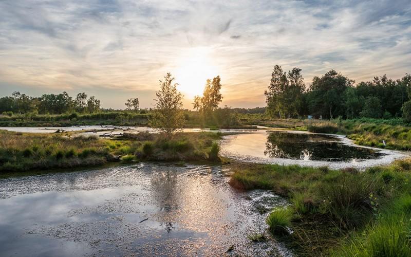 Blick auf das Diepholzer Moor