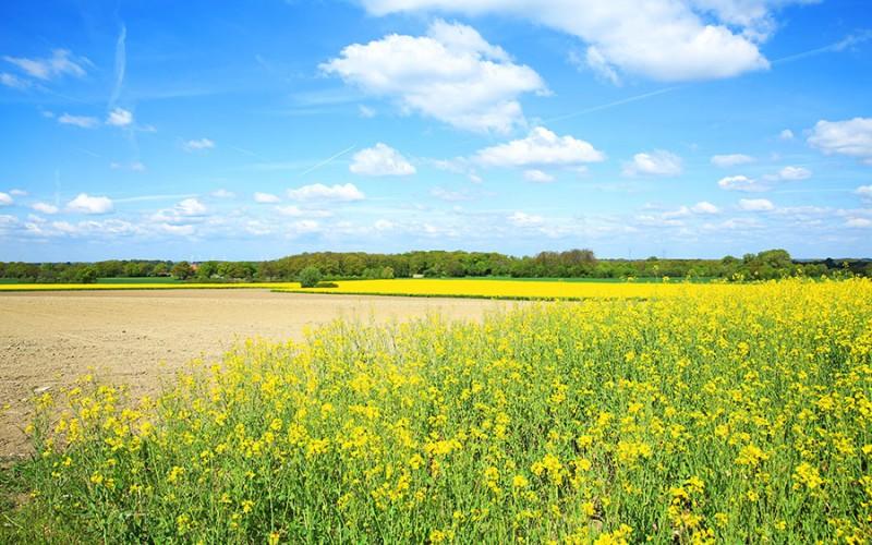 Weites Land mit viel Natur und Kultur - das ist das Münsterland
