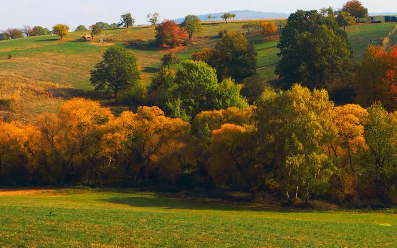 Weltberühmtes Waldgebiet im Herzen Deutschlands: der Spessart