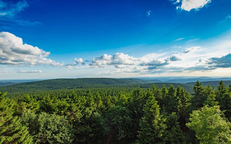 Saftiges Grün, kühler Wald und blauer Himmel - der Thüringer Wald