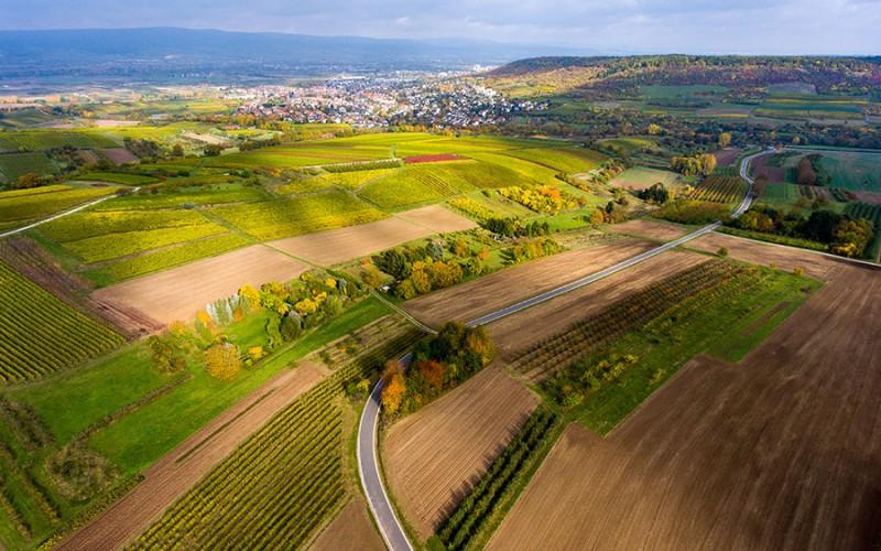 Die liebliche Landschaft von Rheinhessen