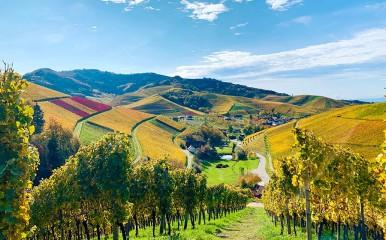 Schöner Ausblick von den Rebbergen aus auf Durbach in der Ortenau