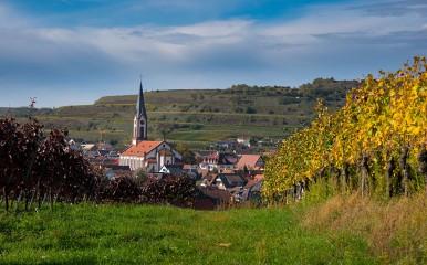Blick von den Weinbergen auf Ihringen